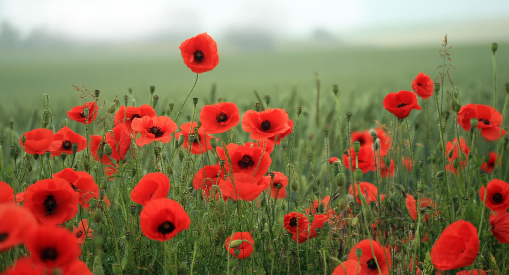 Service of Remembrance – by Shirley Witcomb